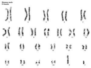 Male Chromosome Set